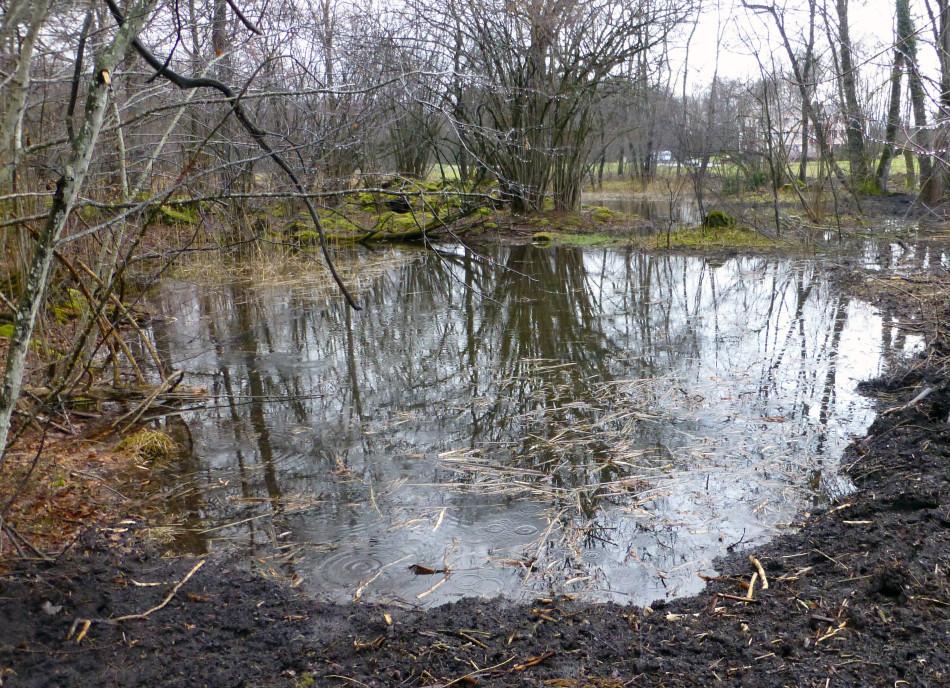 Salez Egelsee hohe Wasserstand