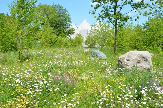 Foto zum Link «Biodiversität im Siedlungsraum»