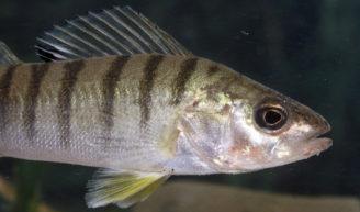 Foto zum Link «Fische»