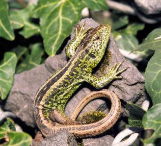 Foto zum Link «Reptilien»