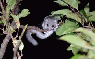 Foto zum Link «Kleine Säugetiere»