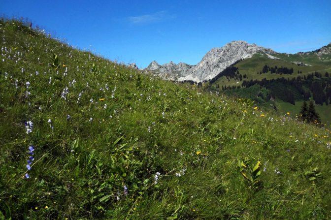Foto zum Link «Wichtige Lebensräume für seltene Pflanzen»